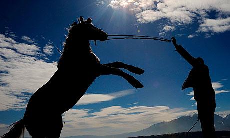 racehorse-007