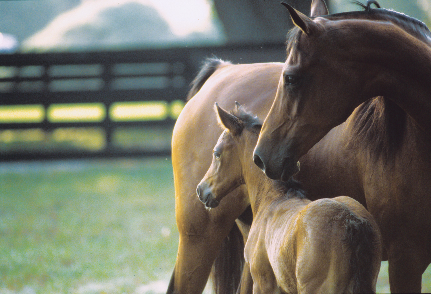 thoroughbred-mare-and-foal