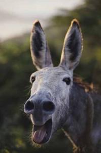 nasrulla-mule