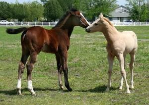 foals love