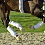 racehorses-legs-2