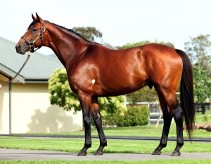 Kentucky Derby winner Big Brown (USA) , Vinery, hailed as the best American racehorse to ever set foot in Australia.